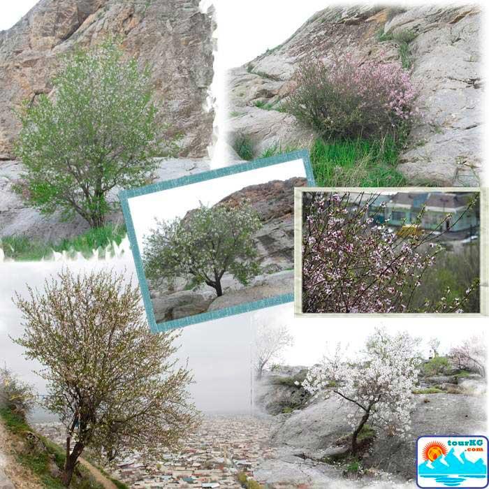 Цветущая гора Сулейман-тоо